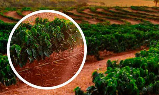 Instituições públicas unem forças em projeto de irrigação de cultura agrícola com fontes de energia renováveis
